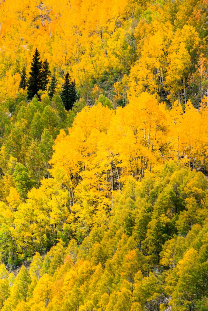 Looking out the window of my hospital room to a mountain of fall aspen glory.