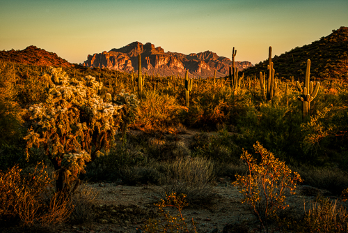 The Sonoran Desert at sunset in Usury Mountain Park in Arizona. Surgery on my ankle allowed hiking.