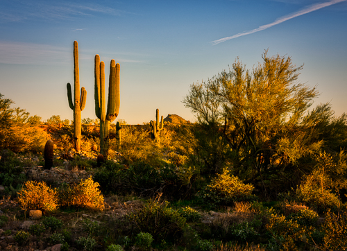 The sun sets on the Sonoran Desert near Scottsdale which surgery on my ankle made it easier for me to photograph.